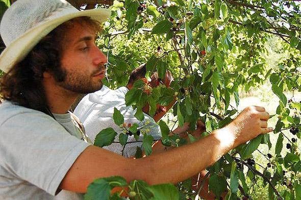 Принципите на природосъобразното земеделие – Михаил Косев [видео]