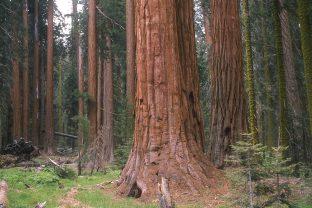 Приказка за трите дървета