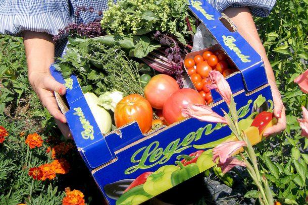 Какво ядат суровоядците? - Зеленчуци отгледани по методите на живото земеделие с радост.