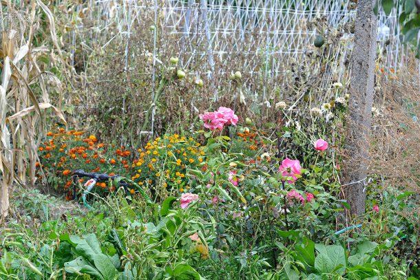 Дневник на гардинаря: 14 октомври 2012 - Есента в градината 02