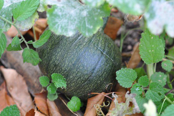 Дневник на гардинаря: 14 октомври 2012 - Есента в градината 04