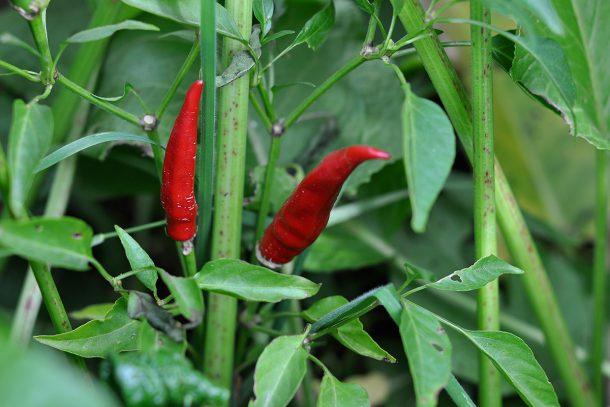 Дневник на гардинаря: 14 октомври 2012 - Есента в градината 07