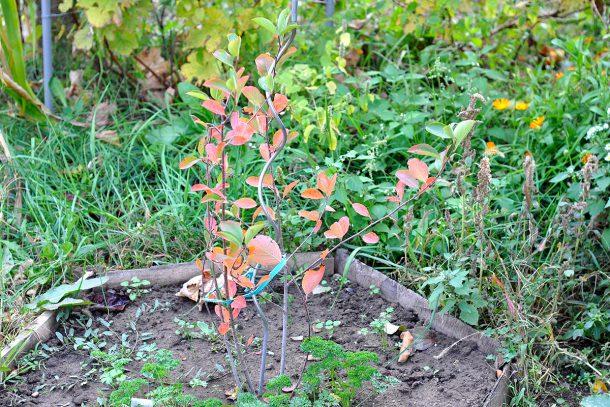 Дневник на гардинаря: 14 октомври 2012 - Есента в градината 08
