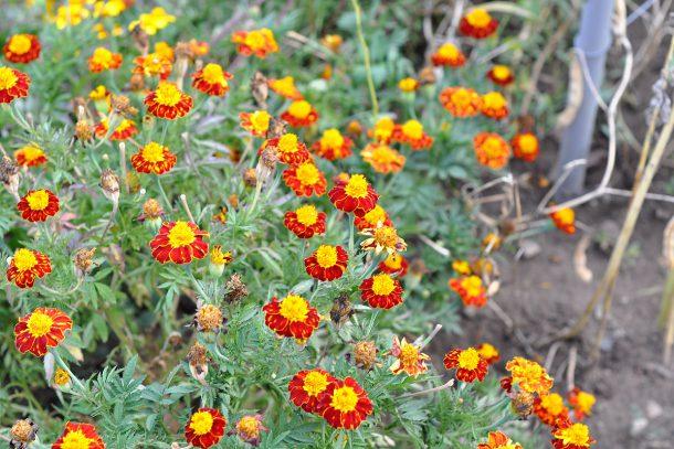 Дневник на гардинаря: 14 октомври 2012 - Есента в градината 09