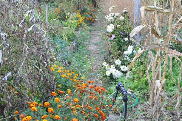 Дневник на гардинаря: 14 октомври 2012 - Есента в градината 13
