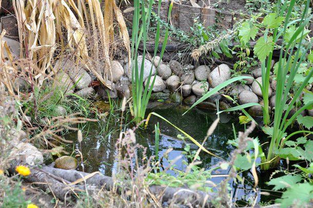 Дневник на гардинаря: 14 октомври 2012 - Есента в градината 14