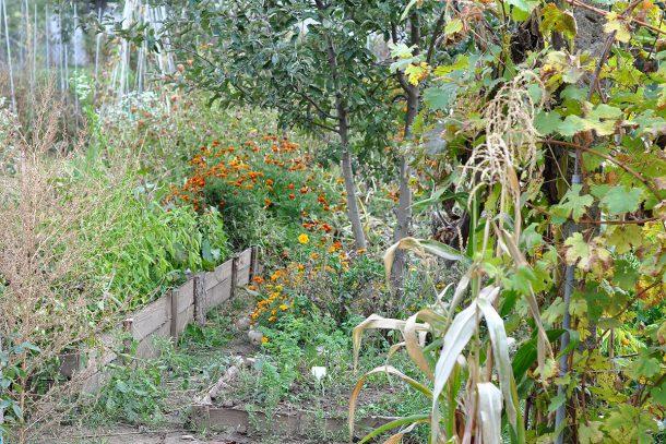 Дневник на гардинаря: 14 октомври 2012 - Есента в градината 16