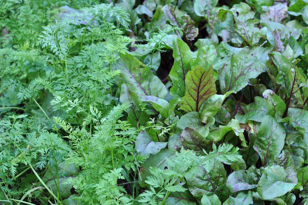 Дневник на гардинаря: 14 октомври 2012 - Есента в градината 17