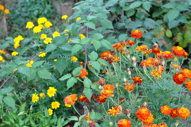 Дневник на гардинаря: 14 октомври 2012 - Есента в градината 19