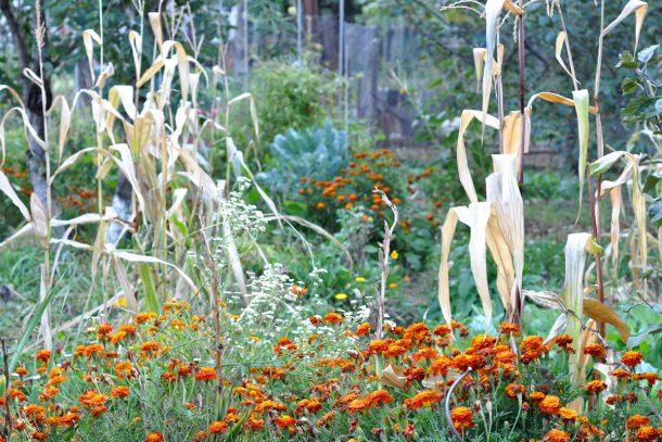Дневник на гардинаря: 14 октомври 2012 - Есента в градината 20