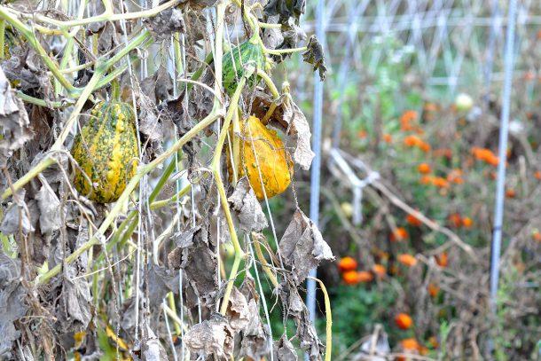 Дневник на гардинаря: 14 октомври 2012 - Есента в градината 21