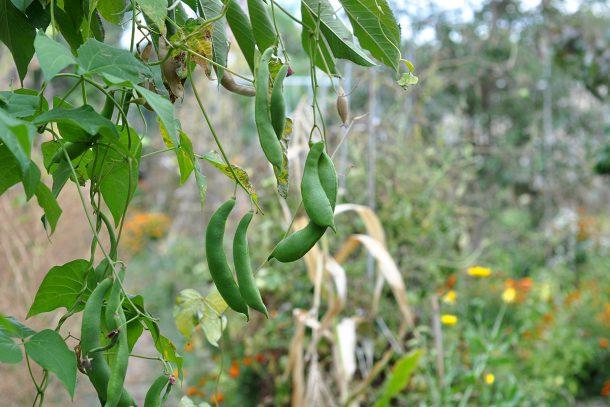 Дневник на гардинаря: 14 октомври 2012 - Есента в градината 22