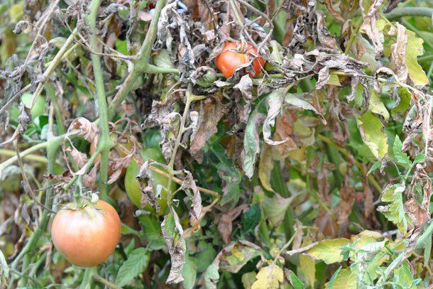 Дневник на гардинаря: 14 октомври 2012 - Есента в градината 26