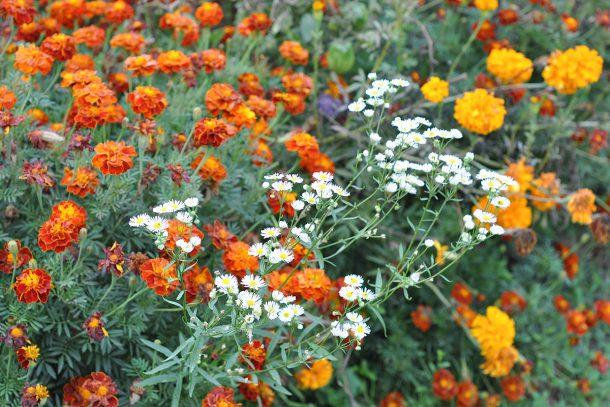 Дневник на гардинаря: 14 октомври 2012 - Есента в градината 28