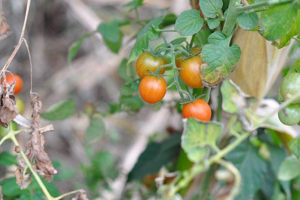 Дневник на гардинаря: 14 октомври 2012 - Есента в градината 29