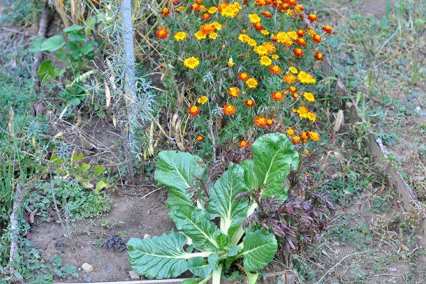 Дневник на гардинаря: 14 октомври 2012 - Есента в градината 30