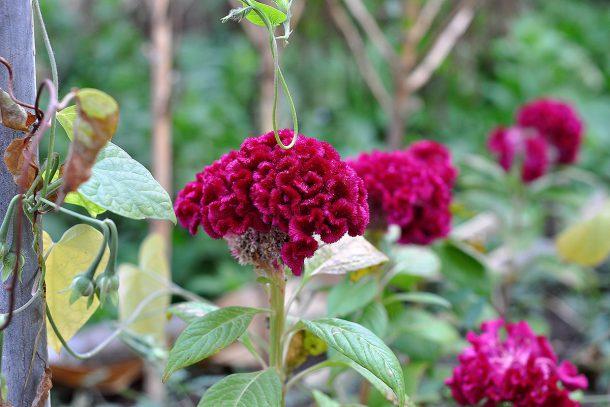 Дневник на гардинаря: 14 октомври 2012 - Есента в градината 31