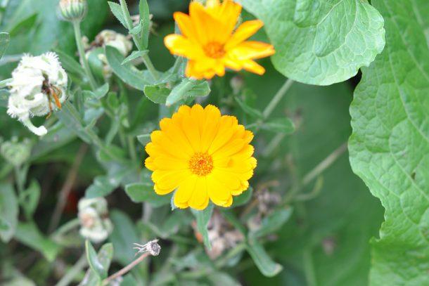 Дневник на гардинаря: 14 октомври 2012 - Есента в градината 33