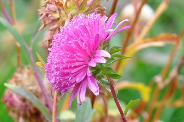 Дневник на гардинаря: 14 октомври 2012 - Есента в градината 34