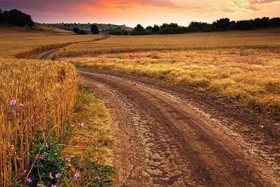 път сред ниви с жито