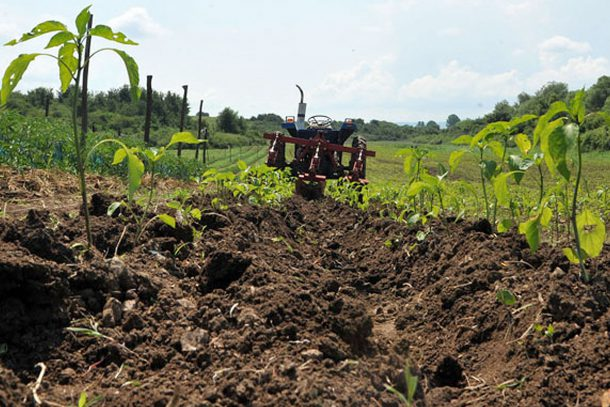 Био земеделие