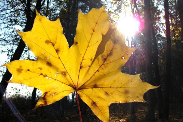 Слънце в гората