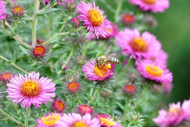 Притча за пчелата и планините Арарат и Синай