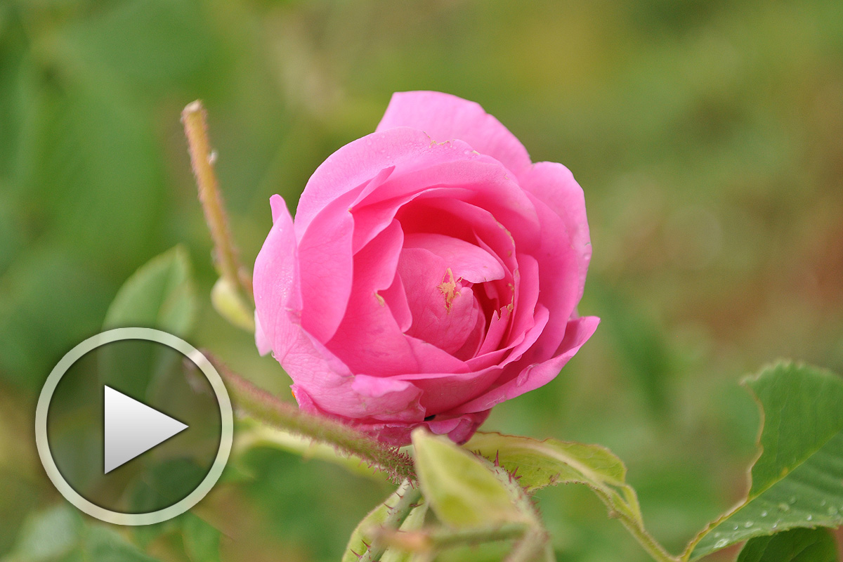 Bachiana Bulgara - красива песен