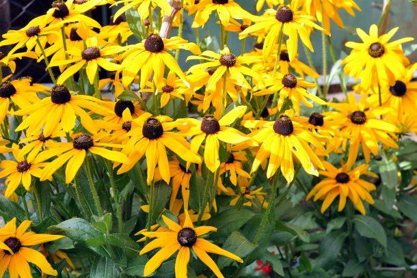 """цветя в градина """"Мирна"""""""
