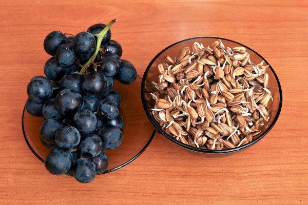 Покълнал слънчоглед и грозде