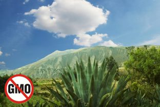 Перу забранява ГМО