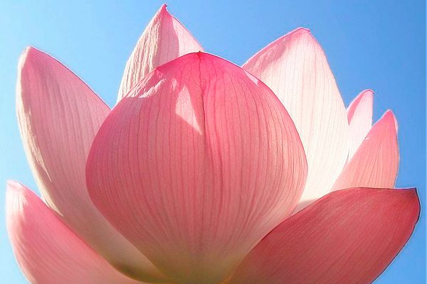 Lotus-karma