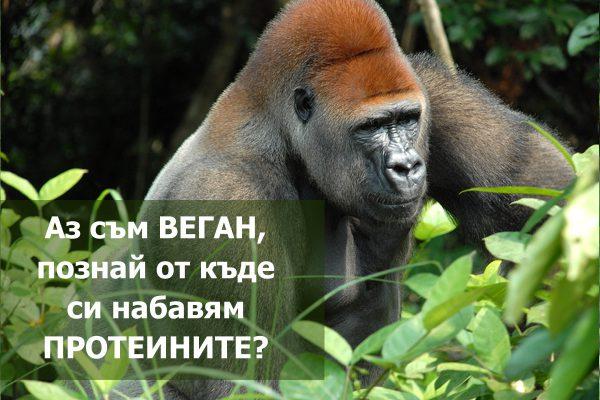 S-Gorilla
