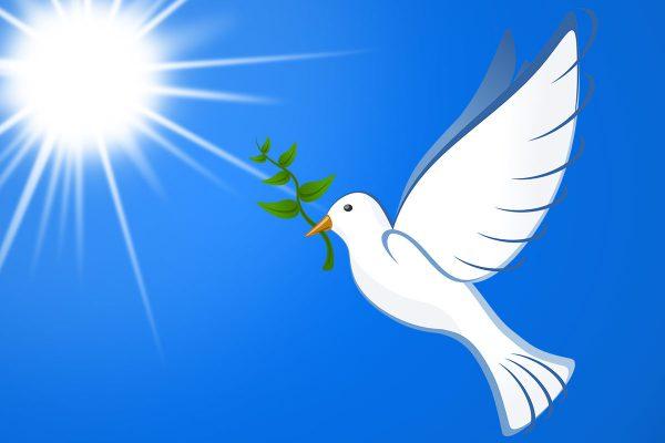 peace-pigeon