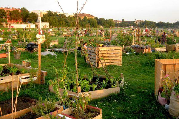 Urban-Gardening-Tempelhof-Berlin-3