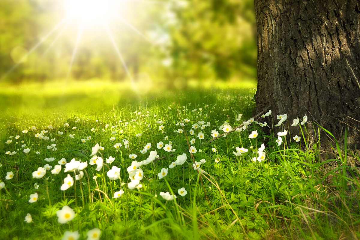 поляна с цветя
