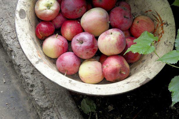 apples-2