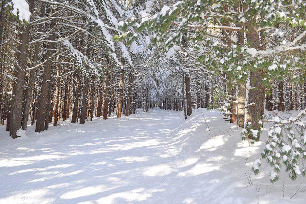 зимна в гората
