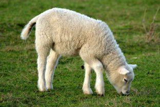 30 мисли на тема вегетарианство от известни личности