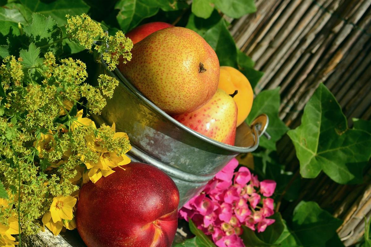 Любов, Благодарност, Разумност в науката за храненето