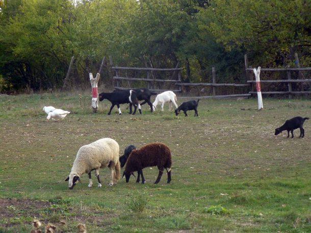 """Ферма """"Приятели на четири крака"""" - галерия"""