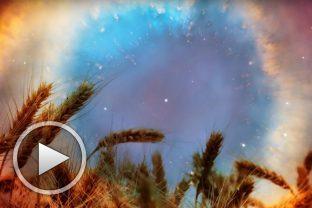 Житено зърно - от Музикална Лаборатория за Човека