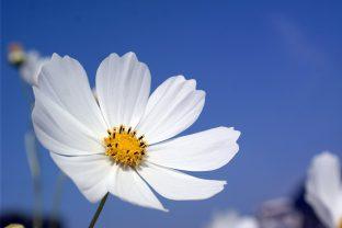 Цялото небе не е нищо друго освен изложба на любовта