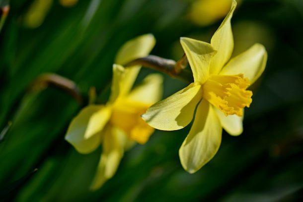 Лекарство срещу стреса са градските цветя