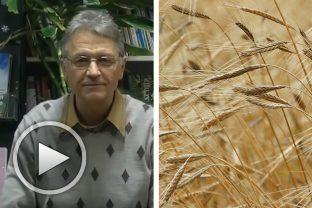 За социалния организъм - от лекция на Димитър Мангуров