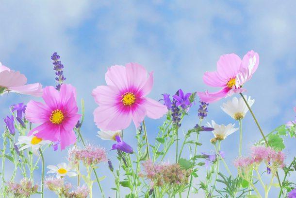 Благодарността като акт към съзнание
