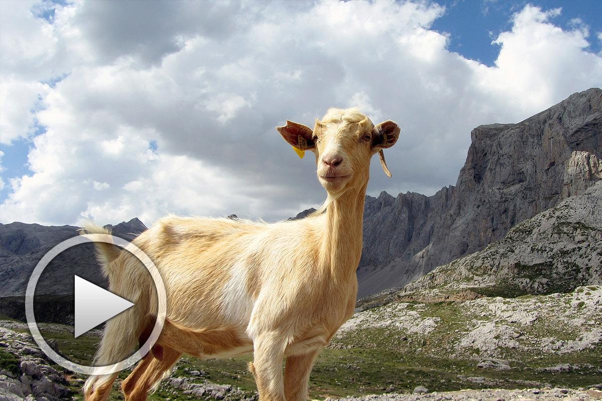 В Швейцария обичаме животните