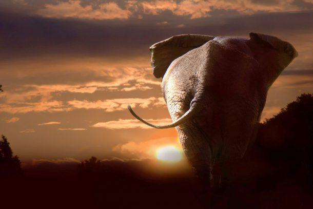 Слон - Известни и неизвестни вегетарианци