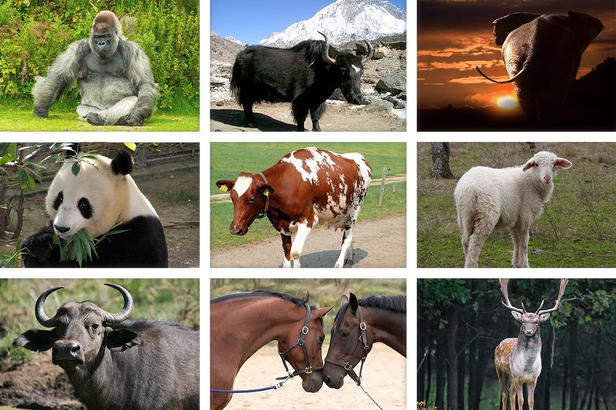 Известни и неизвестни вегетарианци