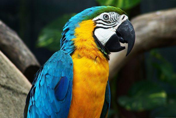 Папагал - Известни и неизвестни вегетарианци